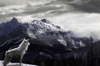 Free Wolf in Mountain Picture for Android, iPhone and iPad