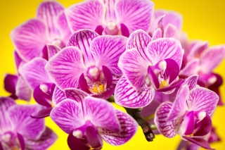 Pink orchid Background for Android, iPhone and iPad