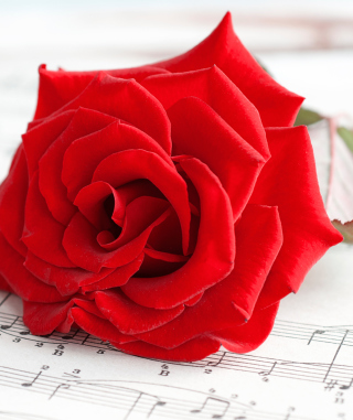 Red Rose Music Wallpaper for iPhone 6 Plus