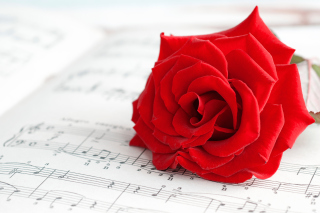 Red Rose Music Wallpaper for Android, iPhone and iPad