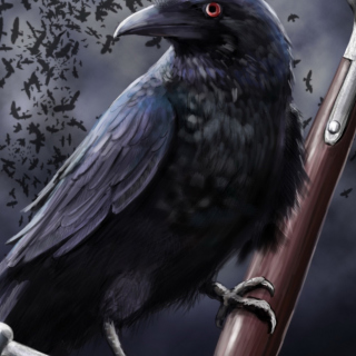 Free Raven Picture for iPad