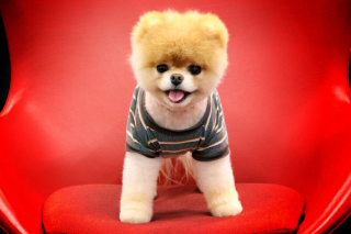 Cutest Puppy Picture for Android, iPhone and iPad