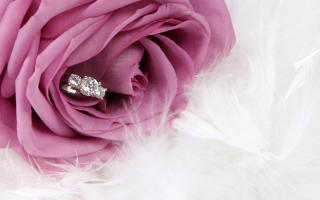 Engagement Ring In Pink Rose Background for Android, iPhone and iPad