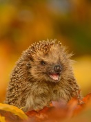 Screenshot №1 pro téma Hedgehog in Autumn Leaves 132x176