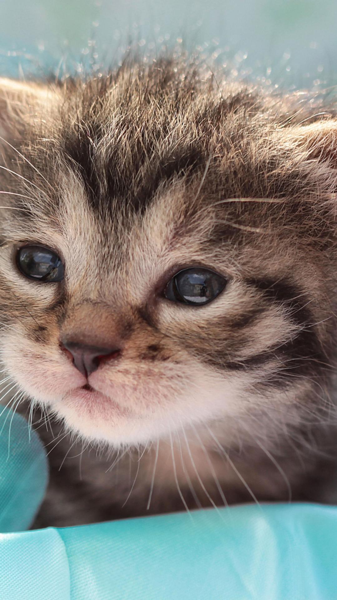 Живой кот картинки