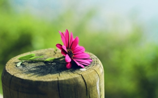 Flower And Wood Picture for Android, iPhone and iPad