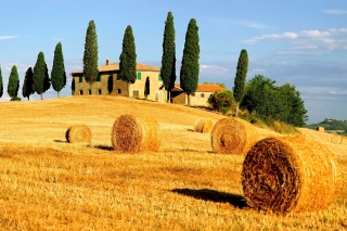 Haystack in Italy Wallpaper for LG P700 Optimus L7