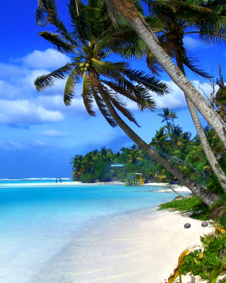 Beach on Cayman Islands - Fondos de pantalla gratis para 640x960