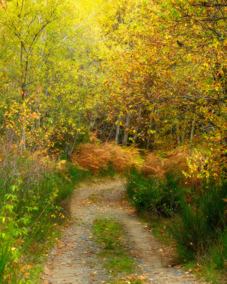 Autumn Path sfondi gratuiti per iPhone 4S
