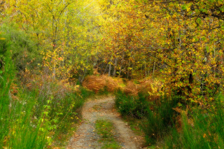 Autumn Path Background for Android, iPhone and iPad