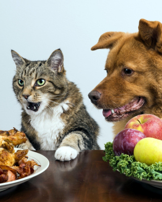 Dog and Cat Dinner Wallpaper for Nokia Asha 306