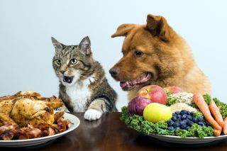 Dog and Cat Dinner Wallpaper for Android, iPhone and iPad