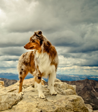 Free Dog On Top Of Mountain Picture for Nokia Asha 311