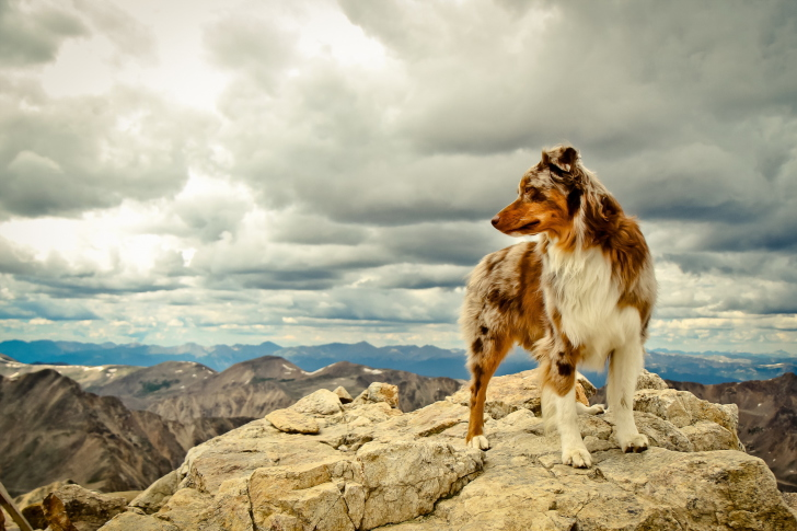Sfondi Dog On Top Of Mountain