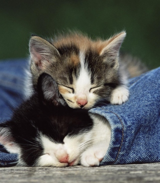 Cute Cats And Jeans sfondi gratuiti per 640x960