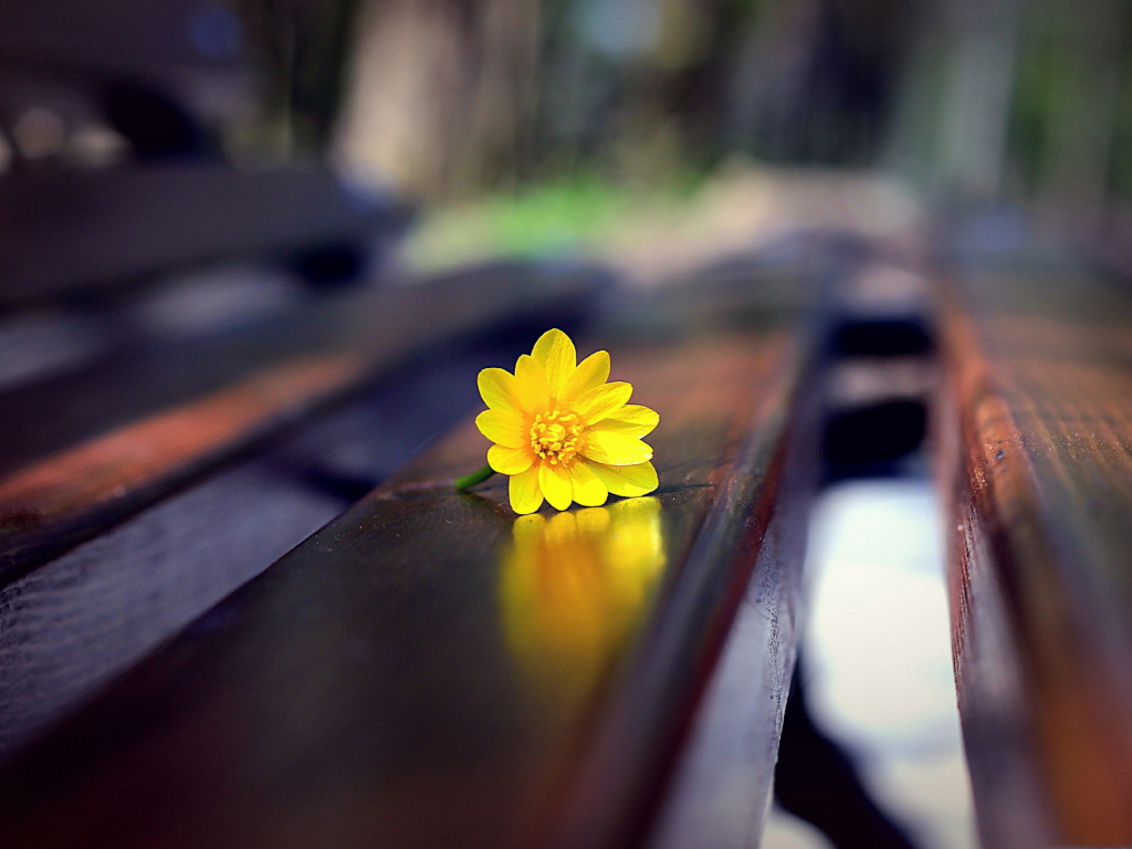 Screenshot №1 pro téma Yellow Flower On Bench 1024x768