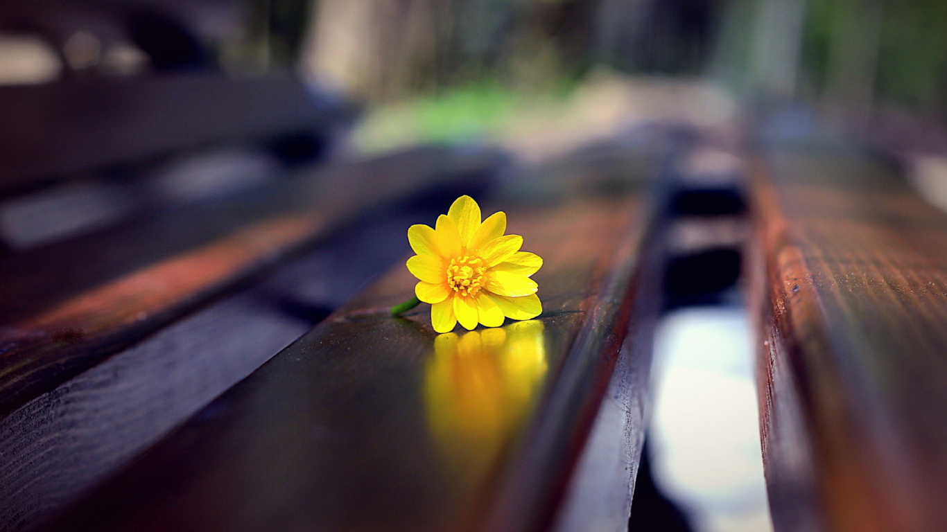 Screenshot №1 pro téma Yellow Flower On Bench 1366x768