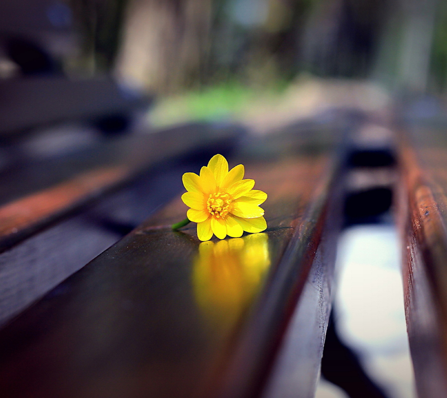 Screenshot №1 pro téma Yellow Flower On Bench 1440x1280