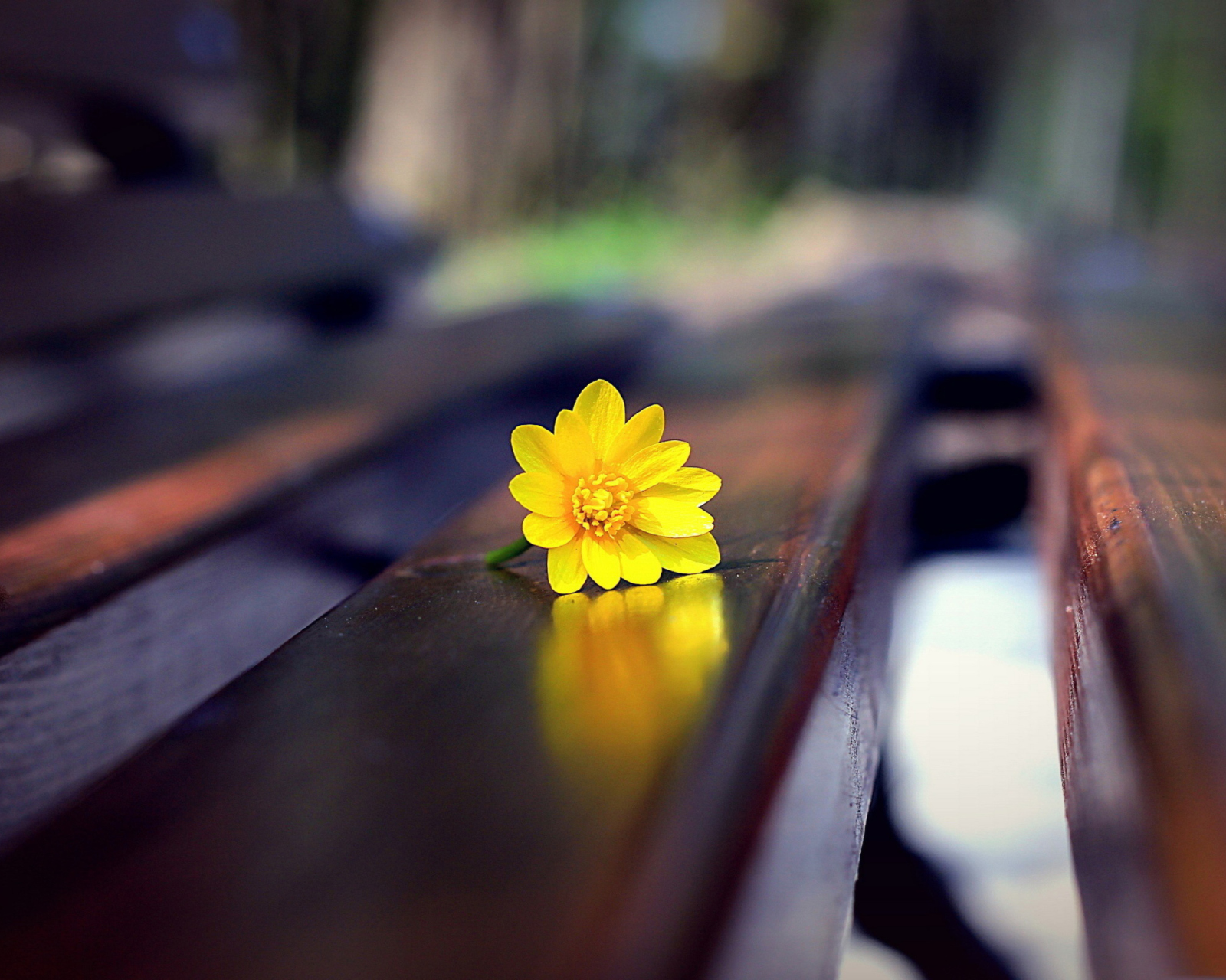 Screenshot №1 pro téma Yellow Flower On Bench 1600x1280