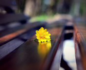 Screenshot №1 pro téma Yellow Flower On Bench 176x144