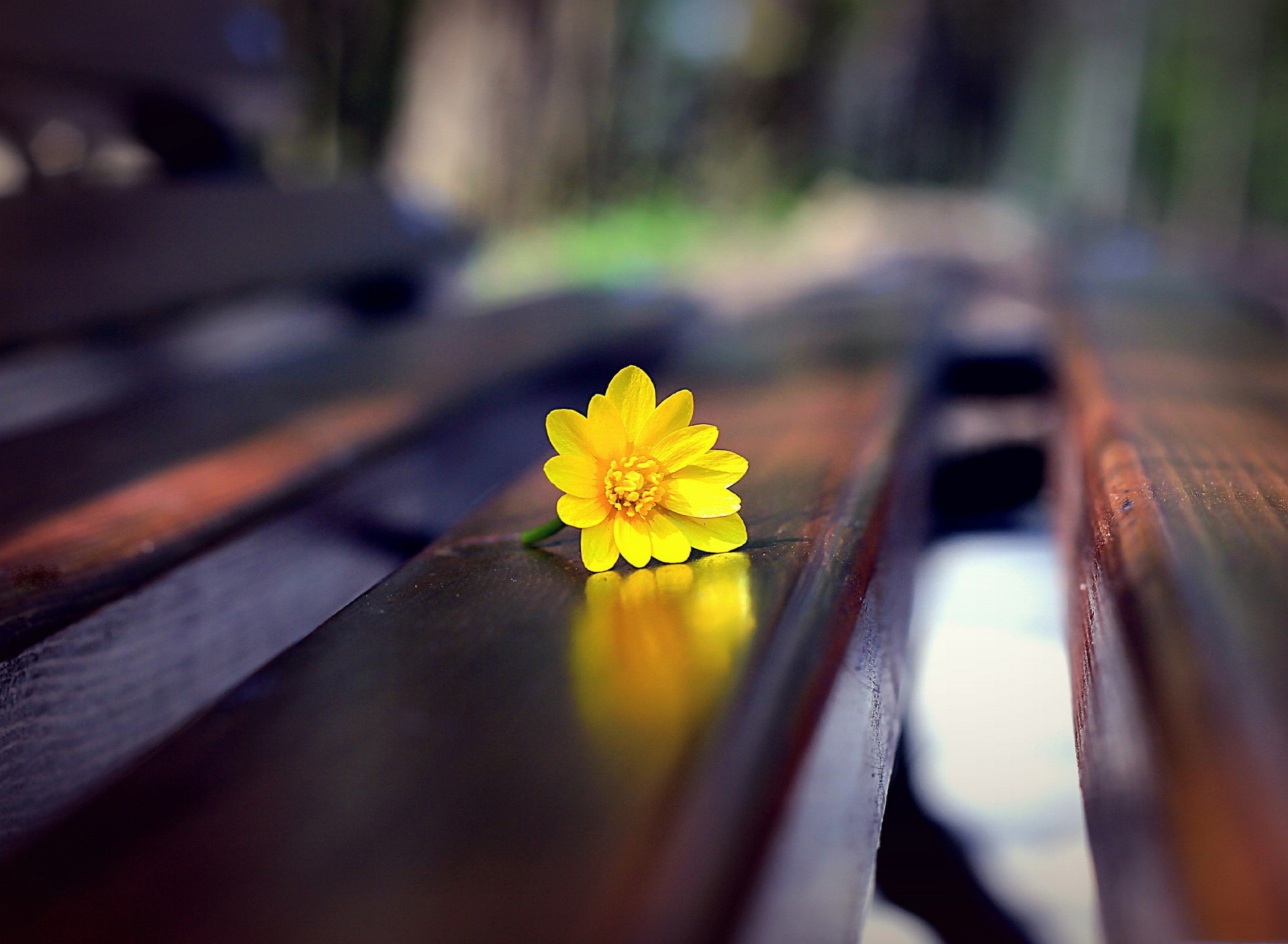 Screenshot №1 pro téma Yellow Flower On Bench 1920x1408