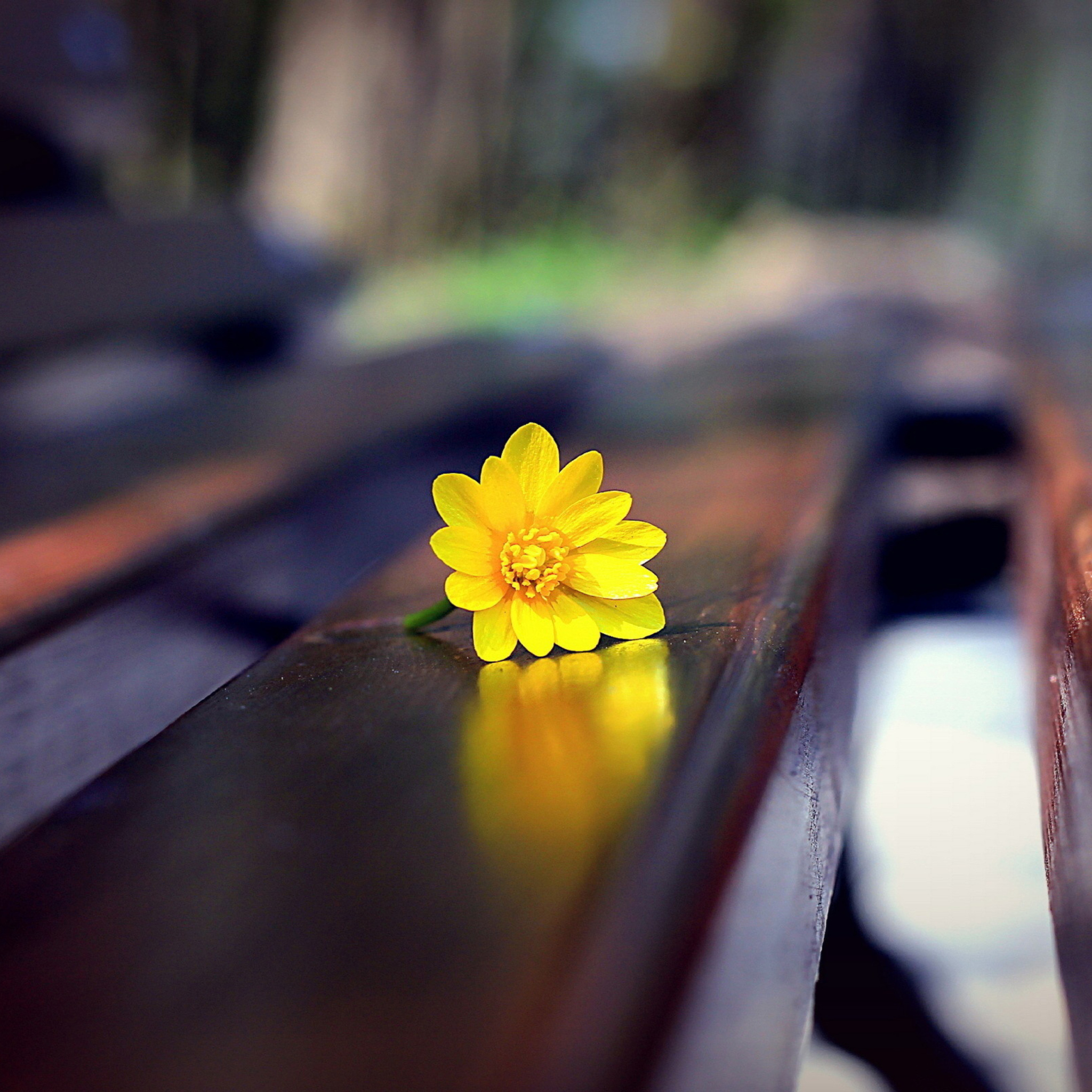 Screenshot №1 pro téma Yellow Flower On Bench 2048x2048