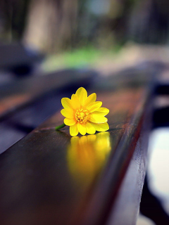 Screenshot №1 pro téma Yellow Flower On Bench 240x320