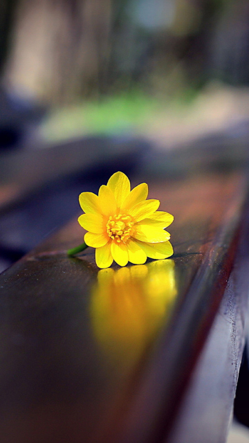 Screenshot №1 pro téma Yellow Flower On Bench 360x640