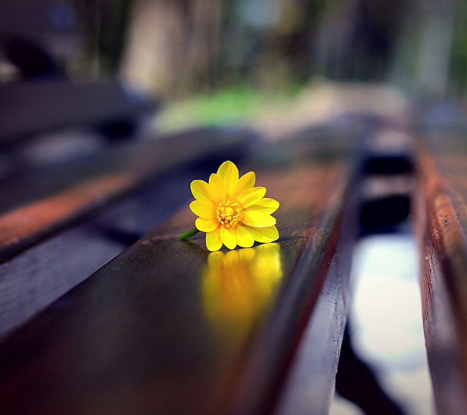 Screenshot №1 pro téma Yellow Flower On Bench 960x854