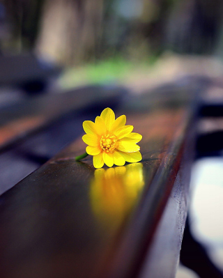 Yellow Flower On Bench Background for Nokia Asha 311