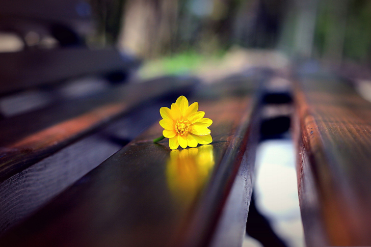 Fondo de pantalla Yellow Flower On Bench