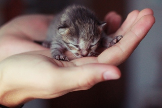 Kostenloses Cute Little Newborn Kitten Wallpaper für Fullscreen Desktop 1400x1050