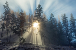 Sunlights in winter forest Picture for Android, iPhone and iPad