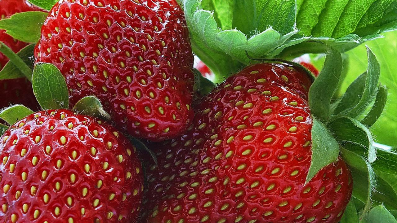 Macro Strawberries