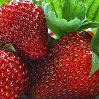 Free Macro Strawberries Picture for iPad mini 2
