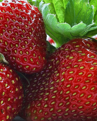 Macro Strawberries Picture for 132x176