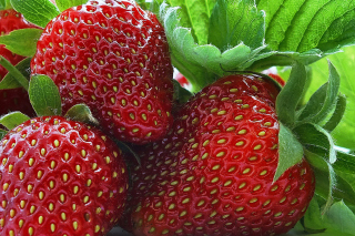 Free Macro Strawberries Picture for Android, iPhone and iPad