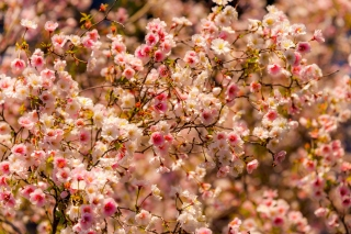 Spring flowering macro papel de parede para celular para Widescreen Desktop PC 1600x900
