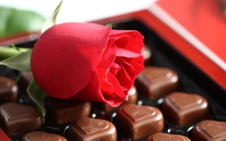 Chocolate And Rose sfondi gratuiti per cellulari Android, iPhone, iPad e desktop