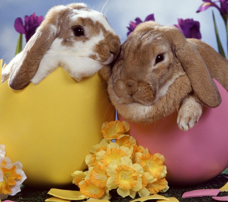 Прикольные, открытки с днем рождения с кроликом