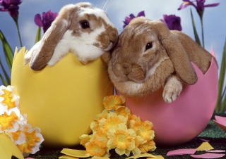 Easter Bunnies Picture for 220x176