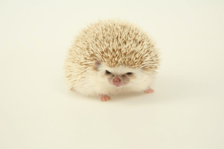 Evil hedgehog Background for Android, iPhone and iPad