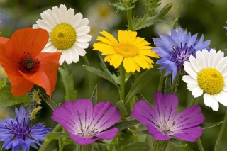 Wild Flowers Bouquet sfondi gratuiti per cellulari Android, iPhone, iPad e desktop