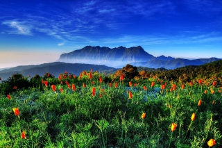 Free Spring has come to the mountains Thailand Chiang Dao Picture for Android, iPhone and iPad