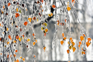 Autumn leaves in frost Background for Android, iPhone and iPad