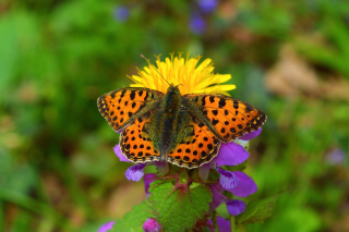 Spring Butterfly Macro Picture for 1366x768
