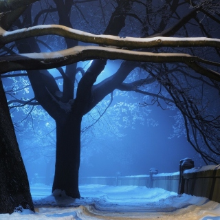 Free Snowy Night in Forest Picture for LG KP105