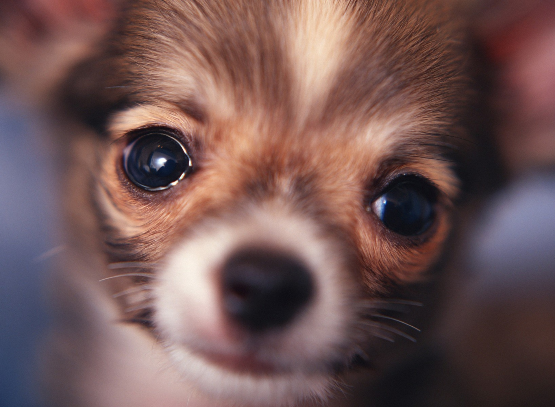 Screenshot №1 pro téma Cute Little Dog 1920x1408