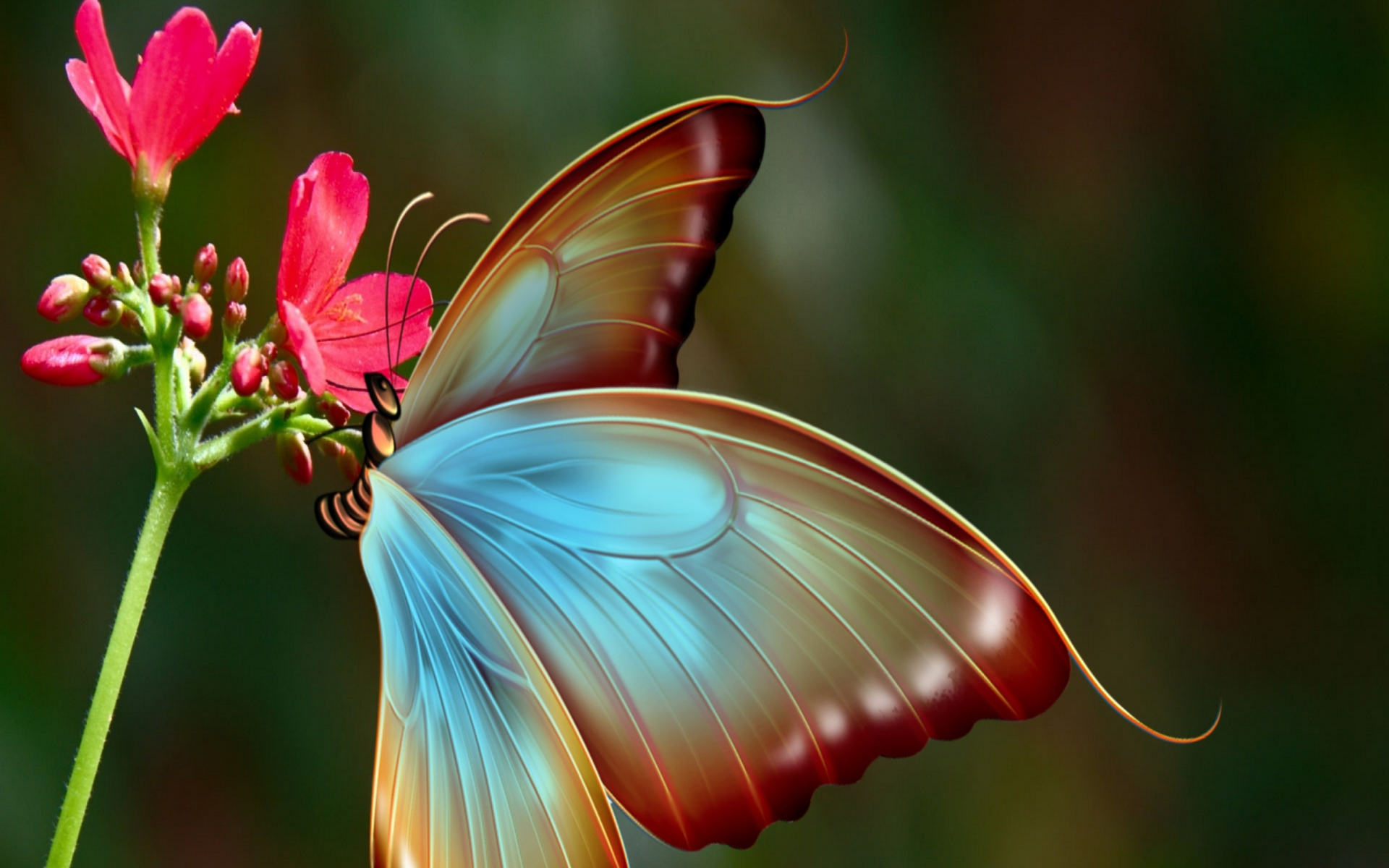 Big Butterfly Wallpaper for Widescreen Desktop PC ...