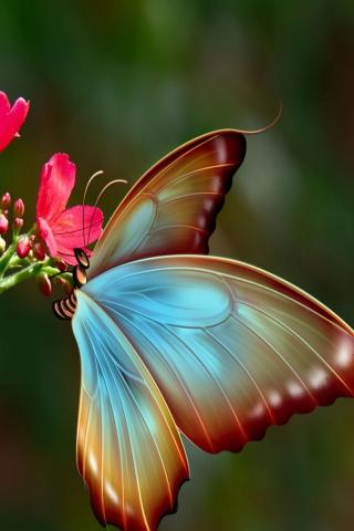 Big Butterfly para Huawei G7300
